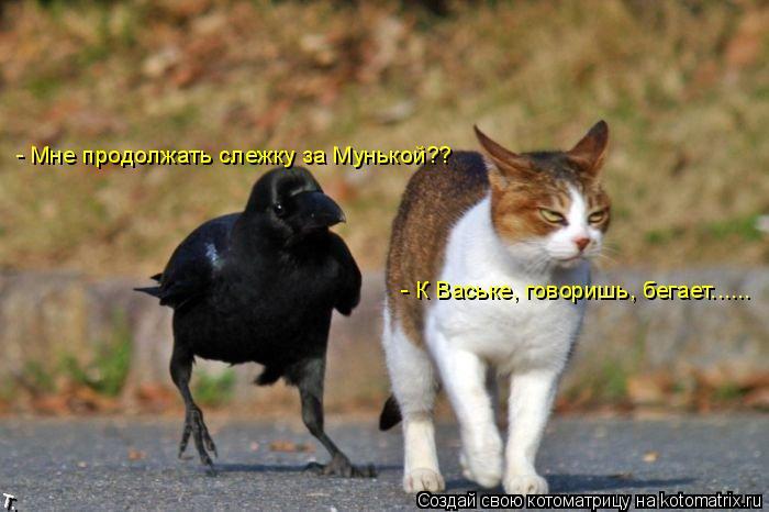 Котоматрица: - Мне продолжать слежку за Мунькой?? - К Ваське, говоришь, бегает......