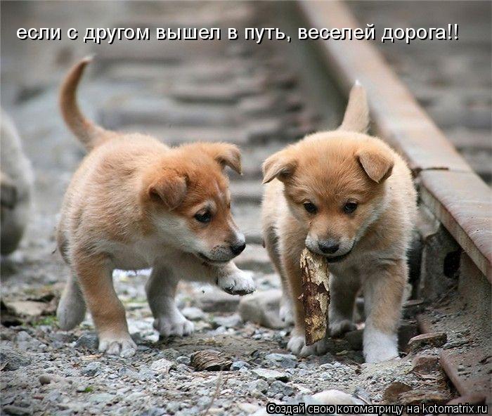 Котоматрица: если с другом вышел в путь, веселей дорога!!