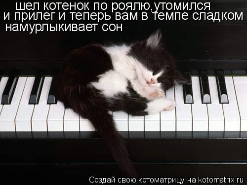 Котоматрица: шел котенок по роялю,утомился и прилег и теперь вам в темпе сладком намурлыкивает сон