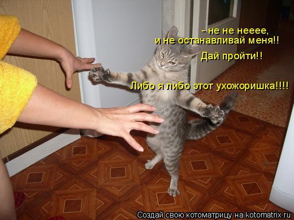 Котоматрица: - не не нееее,  и не останавливай меня!! Дай пройти!! Либо я либо этот ухожоришка!!!!