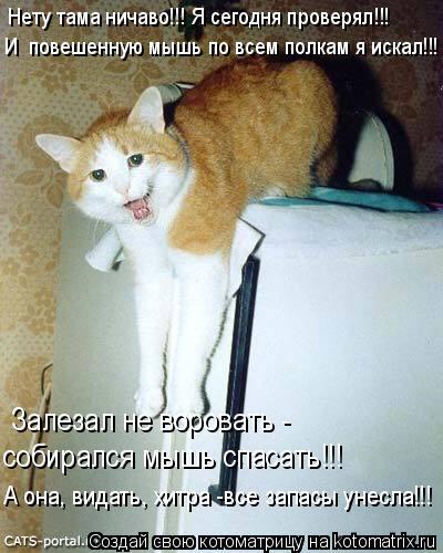 Котоматрица: Нету тама ничаво!!! Я сегодня проверял!!! И  повешенную мышь по всем полкам я искал!!! Залезал не воровать - собирался мышь спасать!!! А она, вида