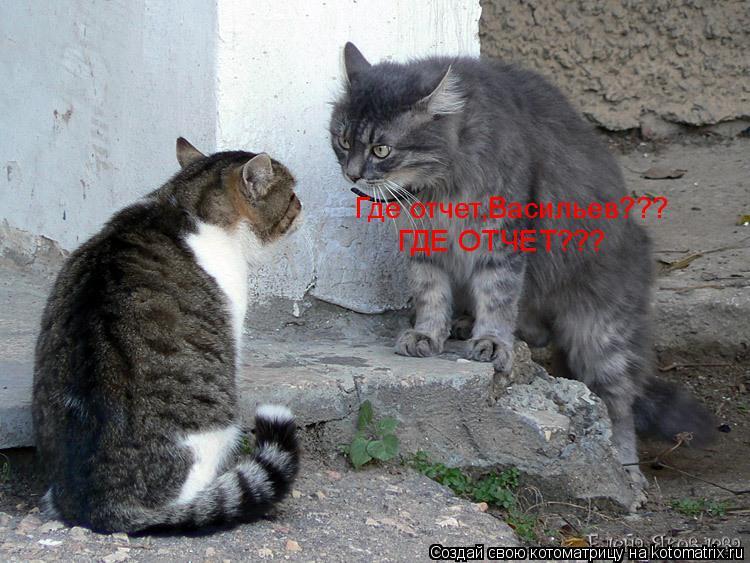 Котоматрица: Где отчет,Васильев??? ГДЕ ОТЧЕТ???