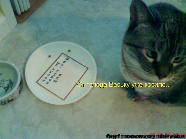 Котоматрица: От голода Ваську уже косило....