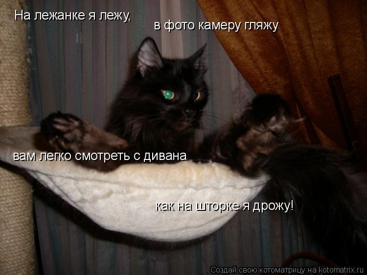 Котоматрица: На лежанке я лежу,  в фото камеру гляжу вам легко смотреть с дивана как на шторке я дрожу!
