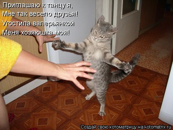 Котоматрица: Приглашаю к танцу я, Мне так весело друзья! Угостила валерьянкой Меня хозяюшка моя!