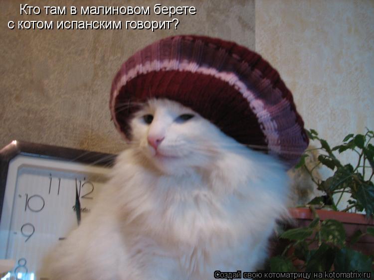 Котоматрица: Кто там в малиновом берете с котом испанским говорит?
