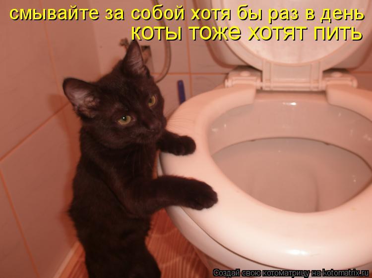 Котоматрица: смывайте за собой хотя бы раз в день коты тоже хотят пить
