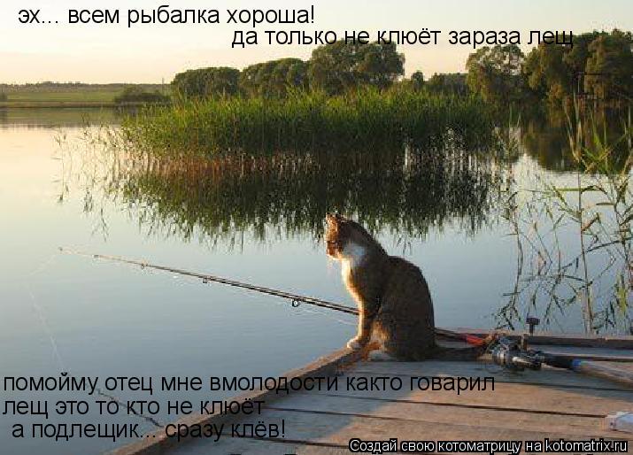 Котоматрица: эх... всем рыбалка хороша! да только не клюёт зараза лещ помойму отец мне вмолодости както говарил лещ это то кто не клюёт а подлещик... сразу