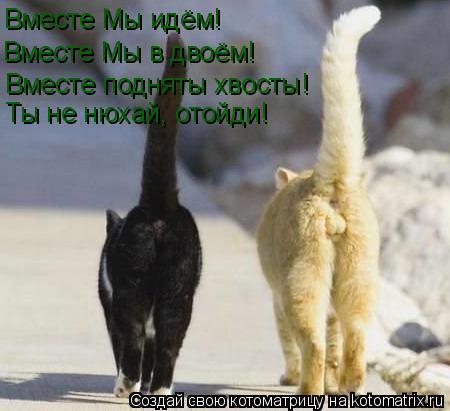 Котоматрица: Вместе Мы идём! Вместе Мы в двоём! Вместе подняты хвосты! Ты не нюхай, отойди!