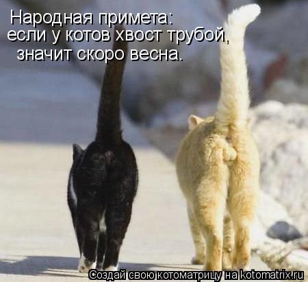 Котоматрица: Народная примета: если у котов хвост трубой,  значит скоро весна.