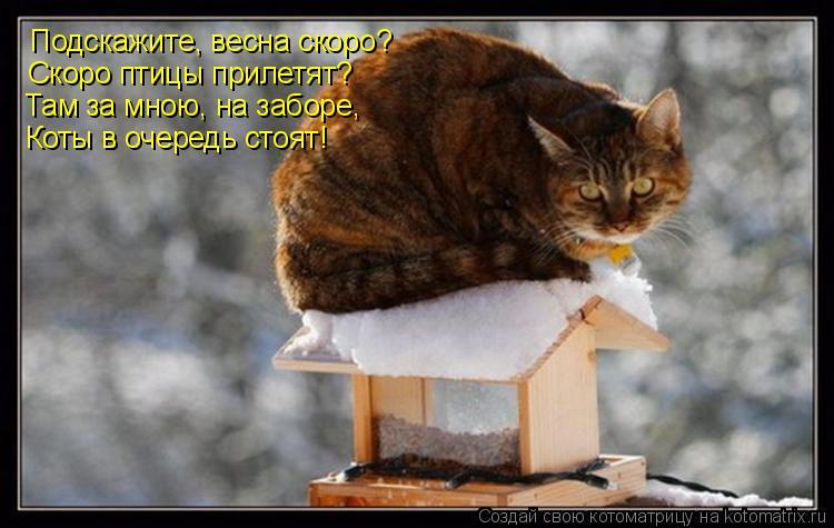 Котоматрица: Подскажите, весна скоро? Скоро птицы прилетят? Там за мною, на заборе, Коты в очередь стоят!