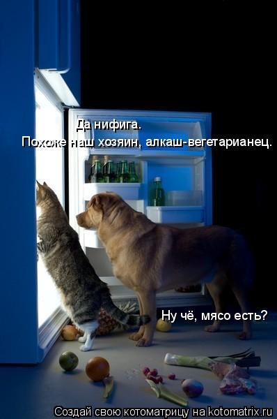 Котоматрица: Ну чё, мясо есть? Да нифига. Похоже наш хозяин, алкаш-вегетарианец.