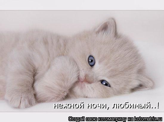 Котоматрица: нежной ночи, любимый..!