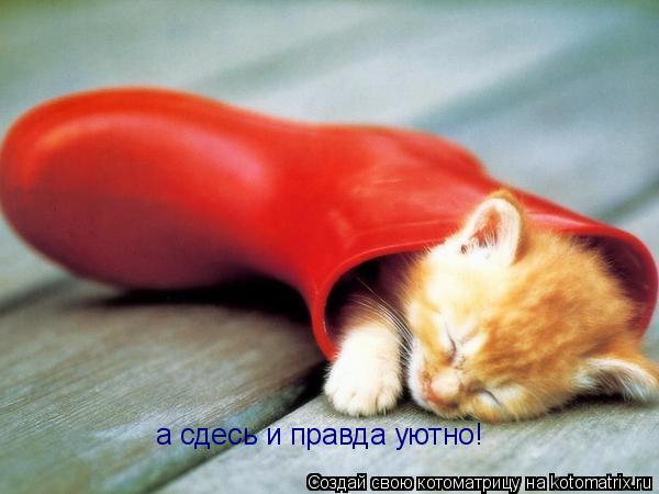 Котоматрица: а сдесь и правда уютно!