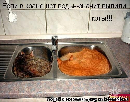 Котоматрица: Если в кране нет воды--значит выпили  коты!!!
