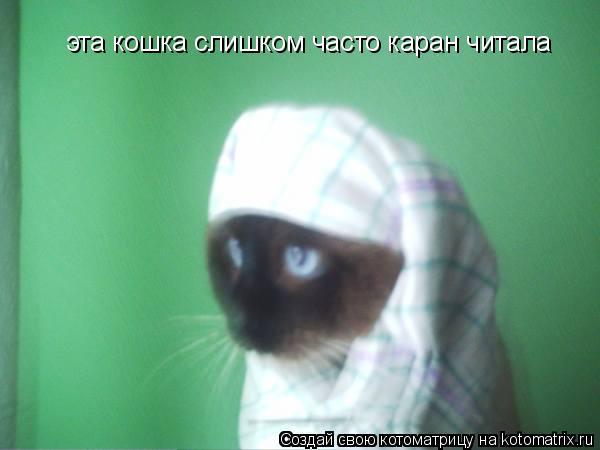 Котоматрица: эта кошка слишком часто каран читала