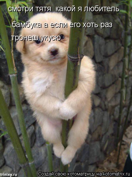 Котоматрица: смотри тятя  какой я любитель бамбука а если его хоть раз тронеш укусю