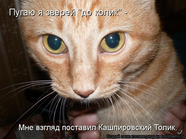 """Котоматрица: Мне взгляд поставил Кашпировский Толик. Пугаю я зверей """"до колик"""" -"""