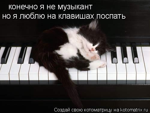 Котоматрица: конечно я не музыкант но я люблю на клавишах поспать