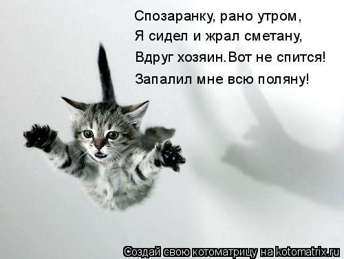 Котоматрица: Спозаранку, рано утром, Я сидел и жрал сметану, Вдруг хозяин.Вот не спится! Запалил мне всю поляну!