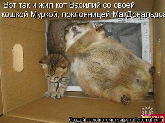 Котоматрица: Вот так и жил кот Василий со своей  кошкой Муркой, поклонницей МакДональдса.