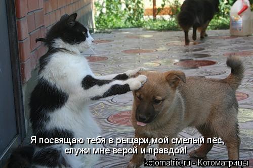 Котоматрица: Я посвящаю тебя в рыцари,мой смелый пёс, служи мне верой и правдой!