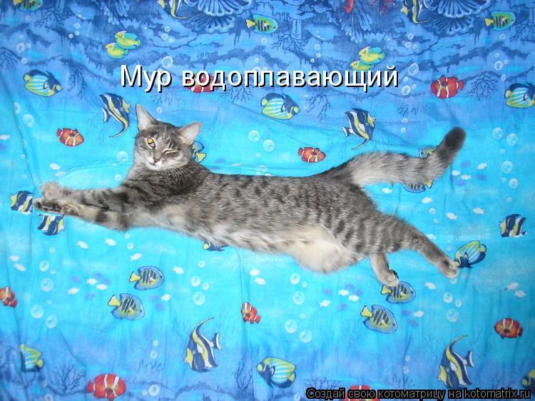 Котоматрица: Мур водоплавающий