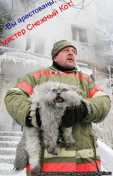 Котоматрица: -Вы арестованы, мистер Снежный Кот!