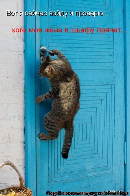 Котоматрица: Вот я сейчас войду и проверю... кого моя жена в шкафу прячет...