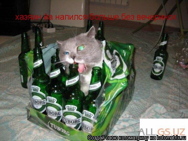 Котоматрица: хазяин йа напился больше без вечеринок