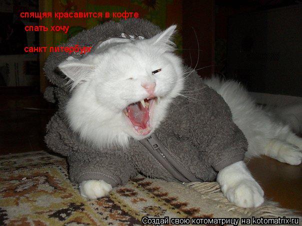 Котоматрица: спящяя красавится в кофте спать хочу санкт питербург