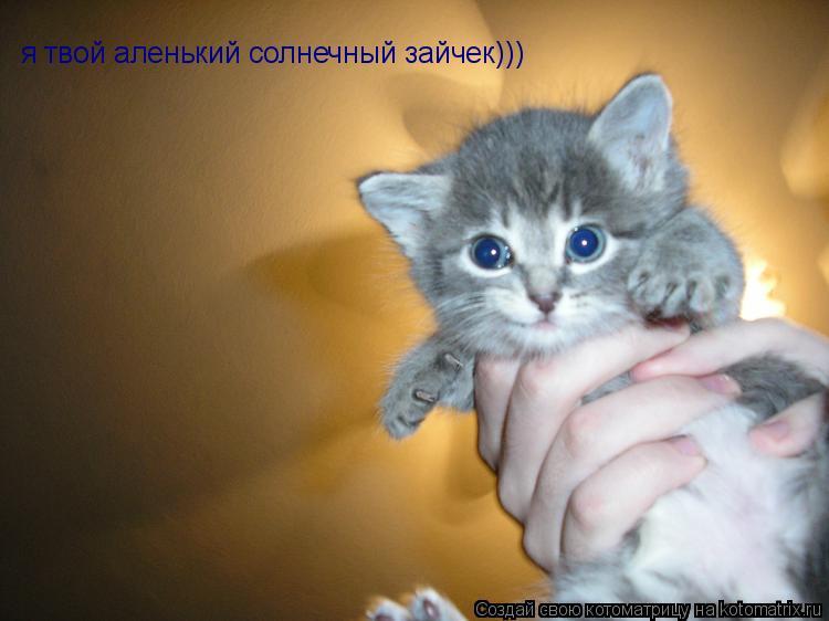 Котоматрица: я твой аленький солнечный зайчек)))