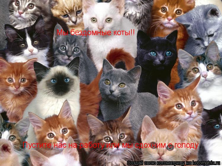 Котоматрица: Пустите нас на работу или мы сдохним с голоду Мы бездомные коты!!