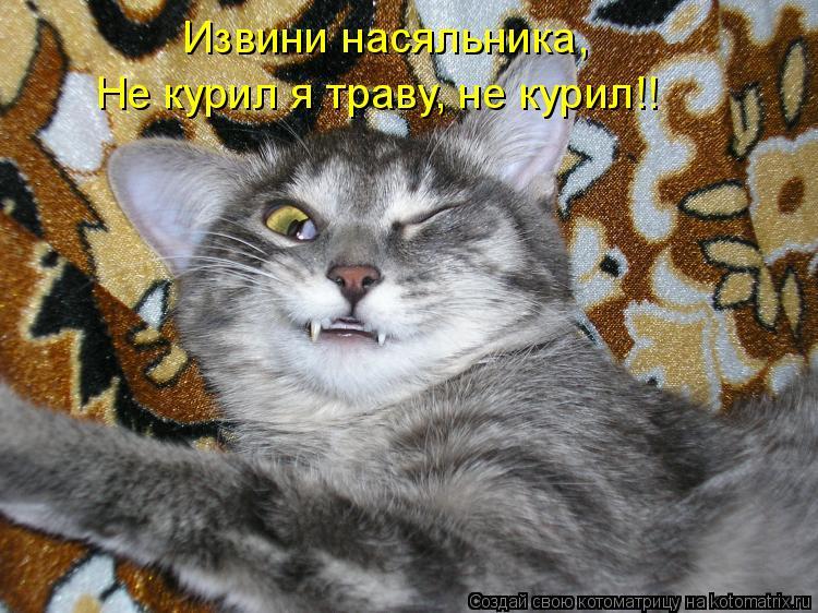 Котоматрица: Извини насяльника, Не курил я траву, не курил!!