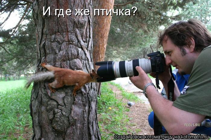 Котоматрица: И где же птичка?