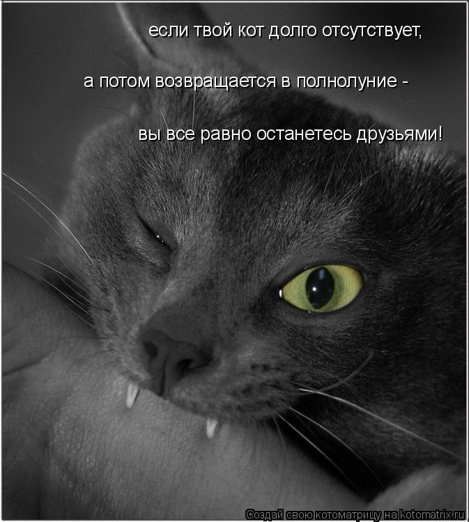 Котоматрица: если твой кот долго отсутствует, а потом возвращается в полнолуние - вы все равно останетесь друзьями!