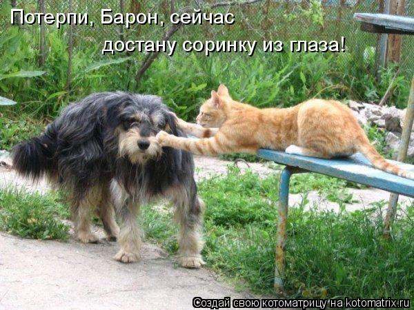 Котоматрица: Потерпи, Барон, сейчас  достану соринку из глаза!