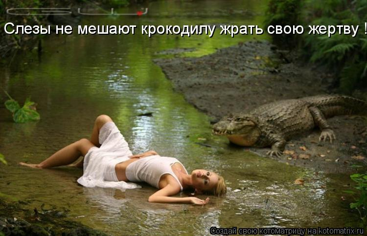 Котоматрица: Слезы не мешают крокодилу жрать свою жертву !!!