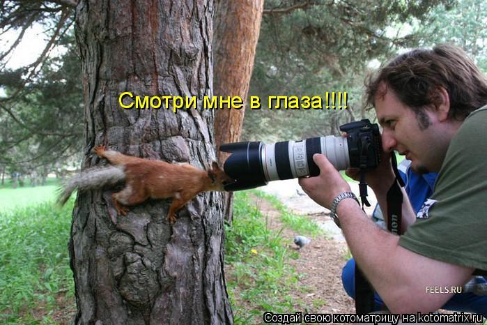 Котоматрица: Смотри мне в глаза!!!!
