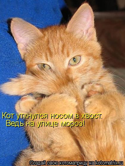 Котоматрица: Кот уткнулся носом в хвост. Ведь на улице мороз!
