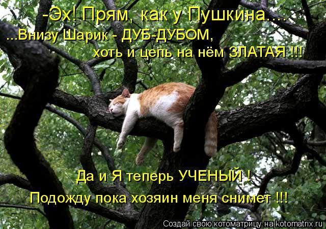 Котоматрица: -Эх! Прям, как у Пушкина.... ...Внизу Шарик - ДУБ-ДУБОМ, хоть и цепь на нём ЗЛАТАЯ !!! Да и Я теперь УЧЕНЫЙ ! Подожду пока хозяин меня снимет !!!