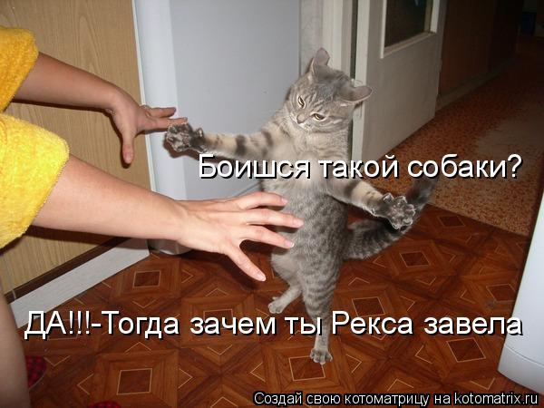 Котоматрица: Боишся такой собаки? ДА!!!-Тогда зачем ты Рекса завела