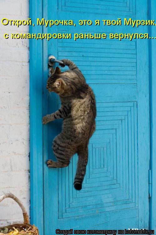 Котоматрица: Открой, Мурочка, это я твой Мурзик,  с командировки раньше вернулся...