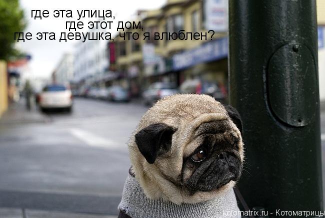 Котоматрица: где эта улица, где этот дом, где эта девушка, что я влюблен?