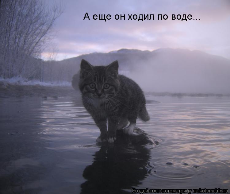 Котоматрица: А еще он ходил по воде...
