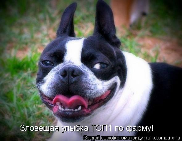 Котоматрица: Зловещая улыбка ТОП1 по фарму!