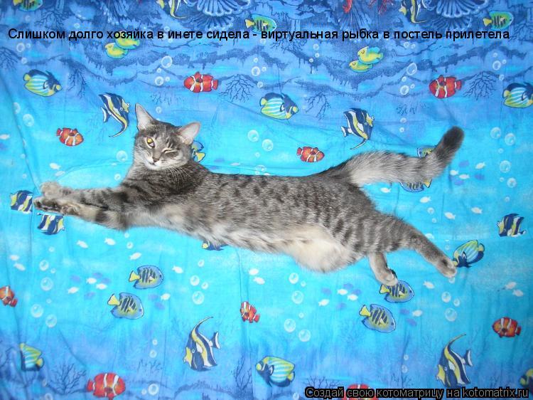 Котоматрица: Слишком долго хозяйка в инете сидела - виртуальная рыбка в постель прилетела