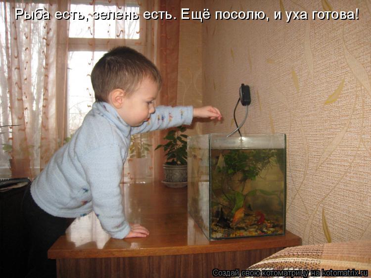 Котоматрица: Рыба есть, зелень есть. Ещё посолю, и уха готова!