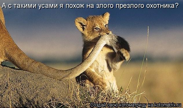 Котоматрица: А с такими усами я похож на злого презлого охотника?