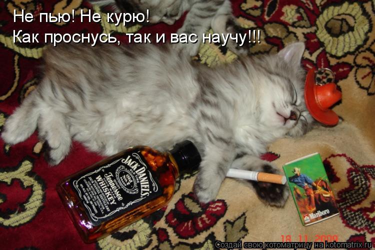 Котоматрица: Не пью! Не курю! Как проснусь, так и вас научу!!!